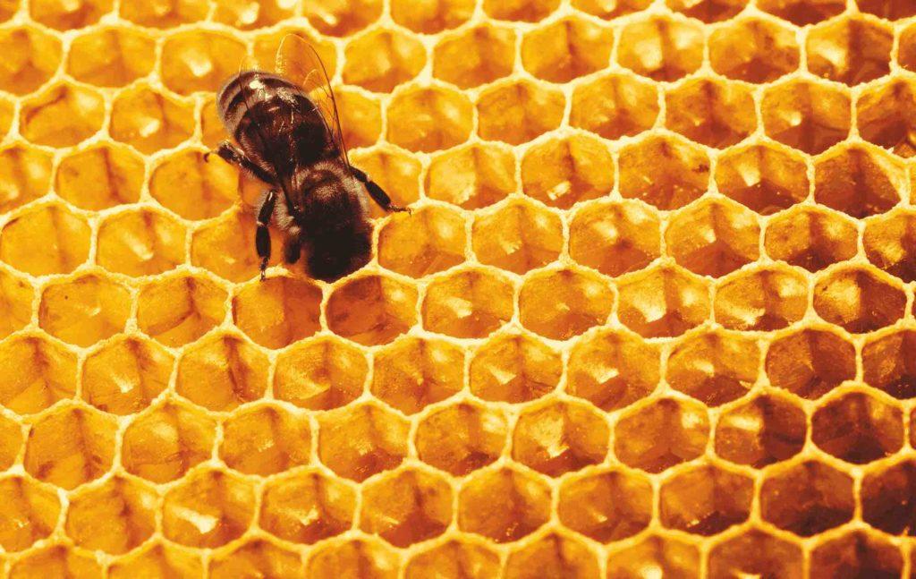 Biene in einer Honigwabe